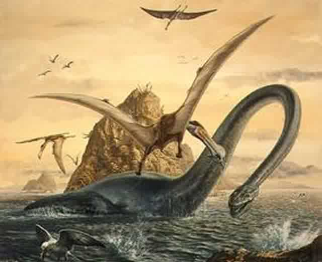 Elasmosaurus Skeleton Dinosaurs